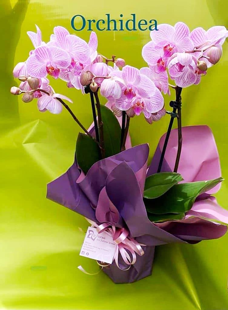 20 11 09 orchidea come mantenerla